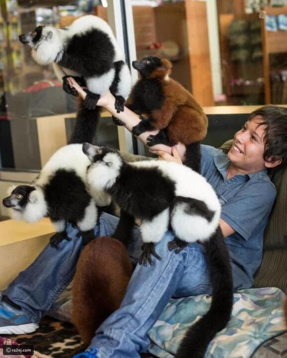 أنت وطفلك: عش تجربة الحياة البرية واقترب من الحيوانات في Jungle Island