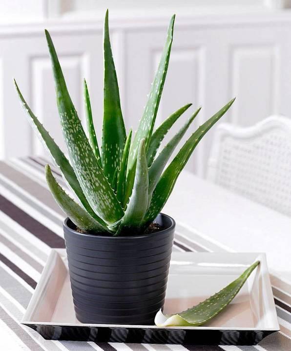 وجود هذه النباتات المنزلية يعالج مشاكل بشرتك لم تفكري في ذلك يوماً