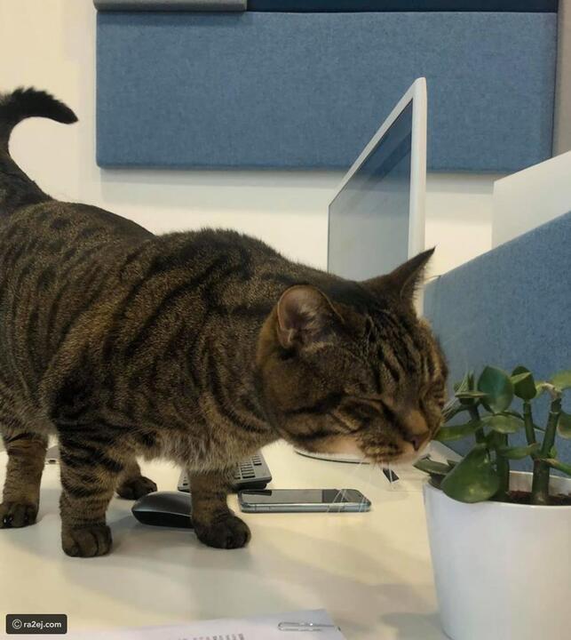 عقاب رادع لراكب على أحد الخطوط الروسية والسبب قطه السمين