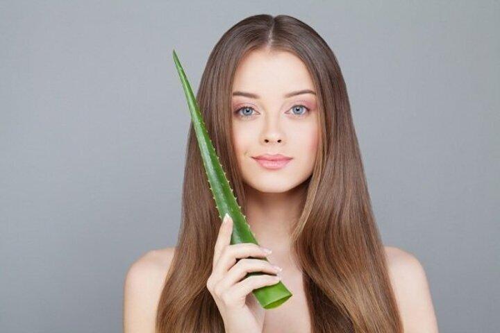 فوائد الصبار لعلاج تساقط الشعر وكيفية استخدامه
