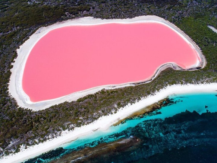 لماذا تكثر البحيرات الوردية في أستراليا؟