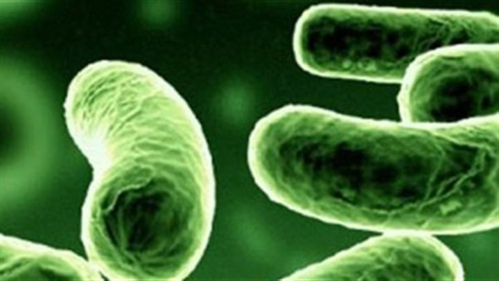 تطوير اختبار جديد لبكتيريا الكلاميديا يقدم النتائج في غضون 30 دقيقة
