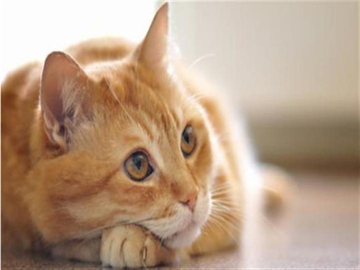 كيف التقط رجل أنفاسه الأخيرة بسبب قطة؟
