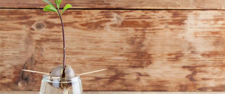 بذور الفواكه: فوائد وأضرار