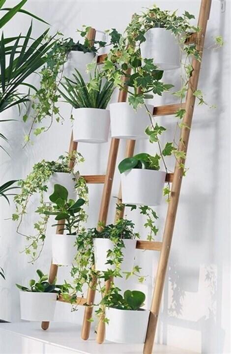 لترتيب النباتات في منزلك... أفكار عملية ومبتكرة!