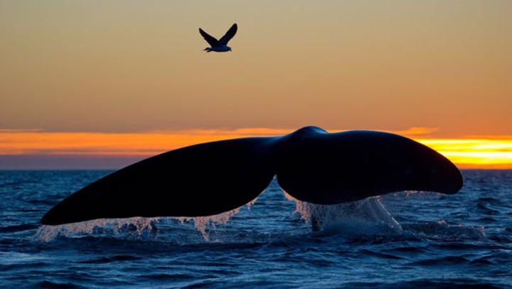 هكذا عاش يونس عليه السلام في بطن الحوت
