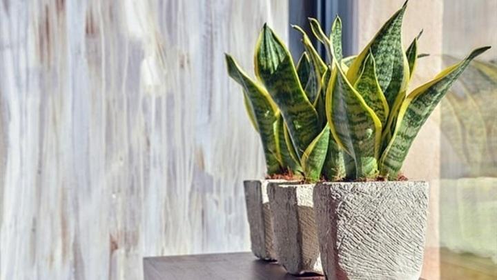 بخلاف تنظيف الهواء.. فوائد غير متوقعة لزراعة النباتات في المنزل