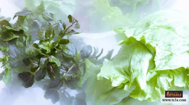 كيف تتعلمي حفظ الخضروات الورقية في الثلاجة لفترة طويلة؟