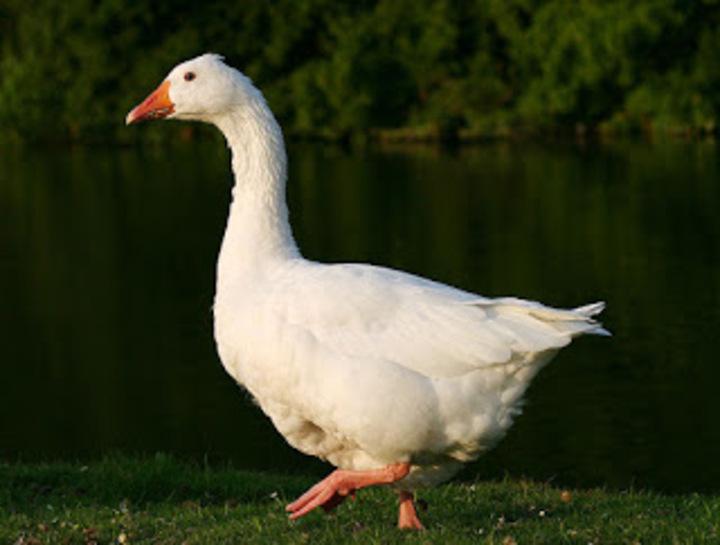 اسماء الحيوانات و الطيور و الاسماك بالأنجليزي