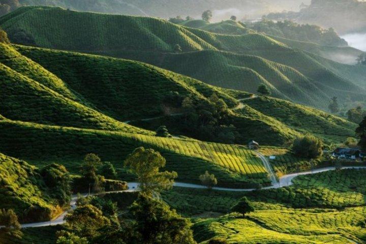 ماليزيا الوجهة المفضلة للعرسان في شهر العسل