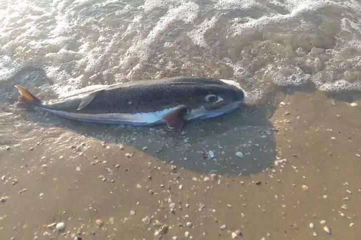 بعد نتائج تلوّث البحر... هل نأكل السمك البلدي وما هي الآثار السلبية؟